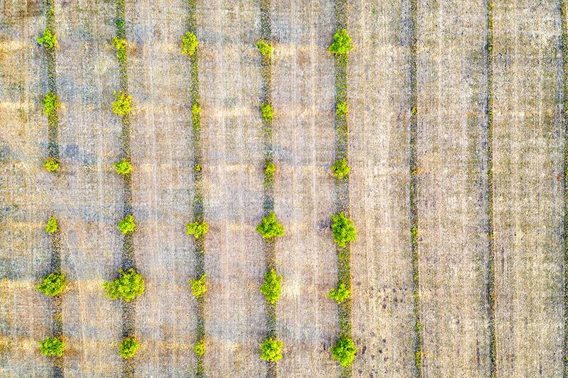 mitad de la imagen cultivada y otra mitad sin cultivar para mostrar la importancia del análisis del suelo agrícola
